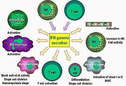免疫系統啟動的雙重認證! - 科學,就是醬